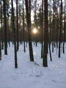 talvepäike