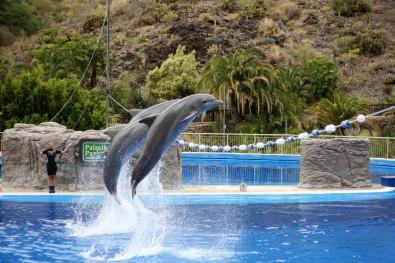 Delfiinid